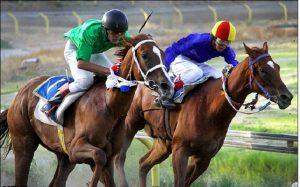 اخذ مجوز میکروچیپ گذاری و ثبت DNA اسب های مسابقه در سبزوار
