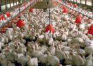 بیش از سه میلیون تومان جریمه مرغداری متخلف سبزوار/عامل توزیع روغن تقلبی در سبزوار دستگیر شد