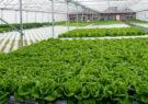 اجرای طرح کشت گلخانهای در ۴۰۰ هکتار از زمینهای زراعی استان